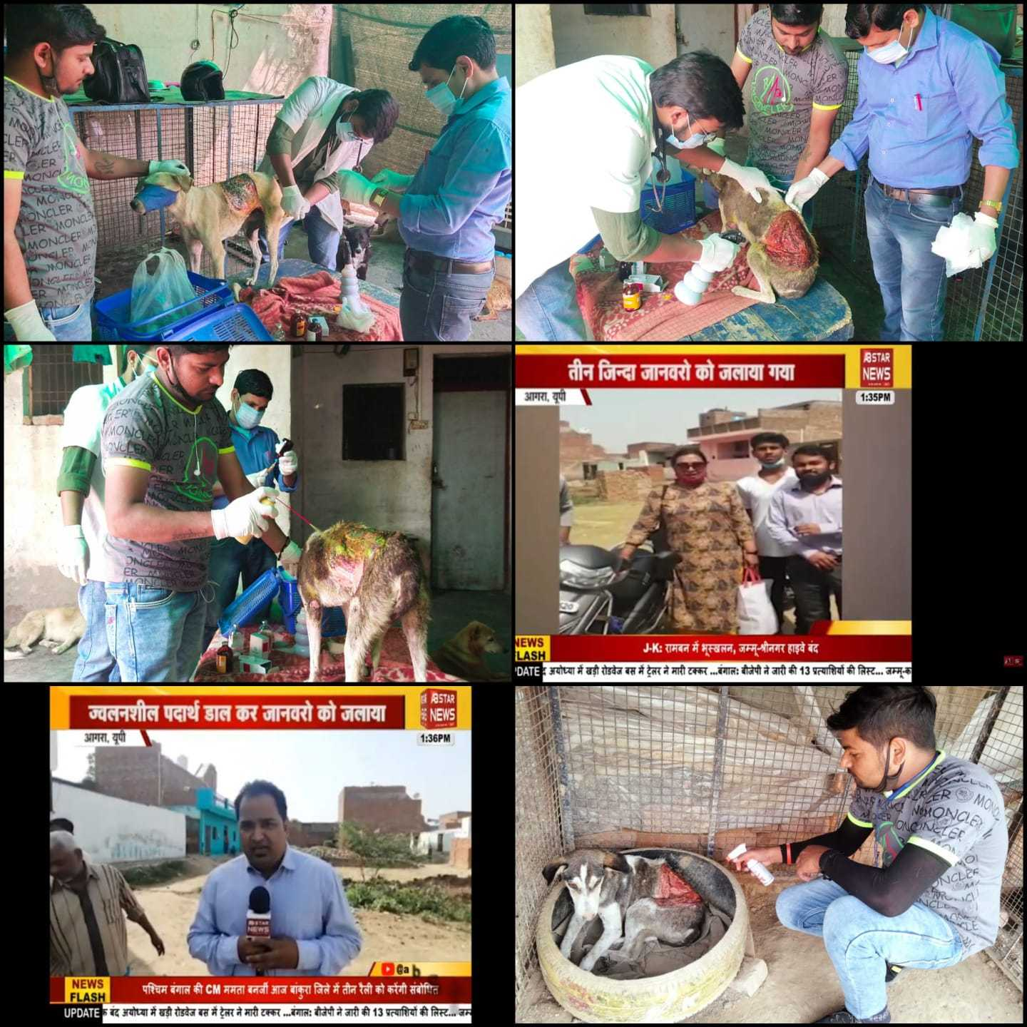 Humanity reached its lowest point when three innocent dogs were attacked by acid at village Khandauli in the dead of the night. The culprits ran away and the case was reported to us on our helpline. The dogs were rescued and brought to the shelter for their treatment, which is a long, tedious and painful road ahead. Also our struggle is on for filing official complaint at the local thana, which has proven to be quite unsuccessful so far.